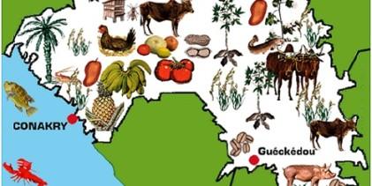 Guinée: l'interdiction d'une marche provoque l'ire des femmes de l'opposition