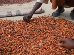 La Guinée mise sur la vente du cacao et du café pour acquérir des devises (Xinhua 29/07/16)