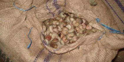 Guinée : le lucratif marché de la noix de cajou (TV5 30/07/16)