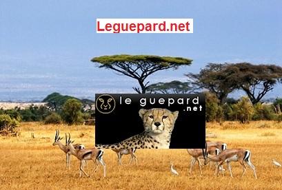 GUINEE / Communiqué de la rédaction du guepard.net à l'attention de certains membres de l'Union des Forces Républicaines(UFR) qui confondent le guepard.net au site du parti.